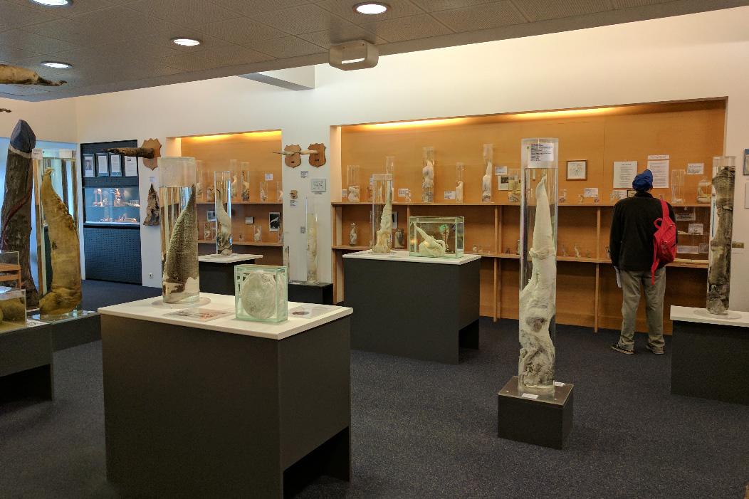 Фаллологический музей