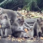 лес обезьян на Бали, Убуд