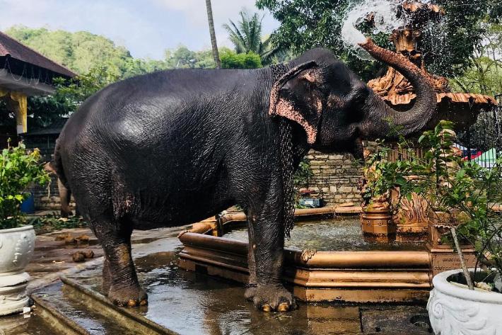 покататься на слоне в Тайланде