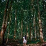 Бедугул на Бали - Индонезия